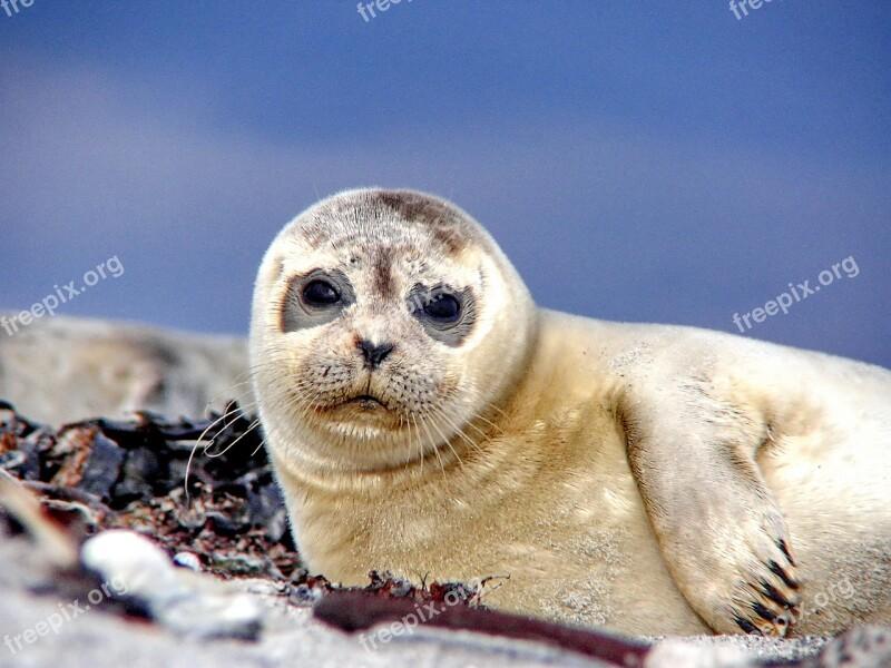 Seal Robbe Sea Beach North Sea