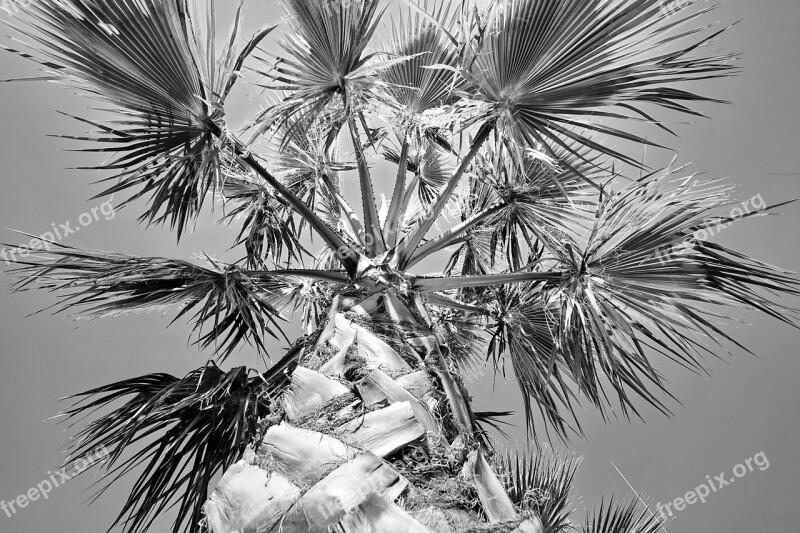 Palm Plant Sky Black And White Palm Leaf