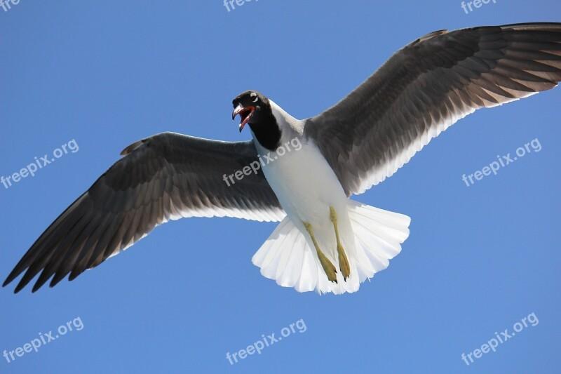 Sea Gulls Sky Flight Wing