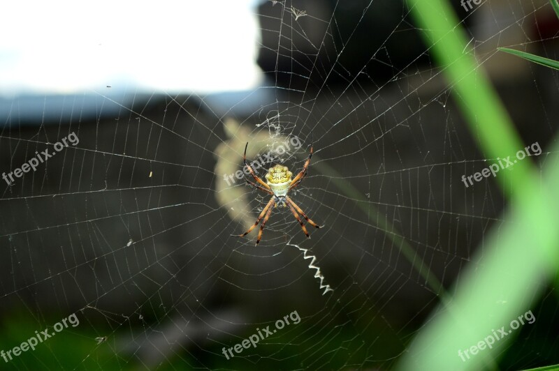 Spider Cobweb Nature Insects Free Photos