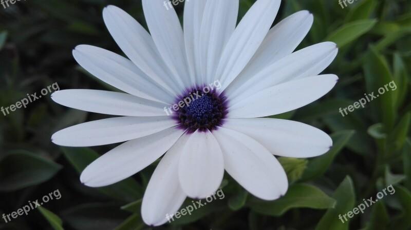 White Flower Garden School Purple