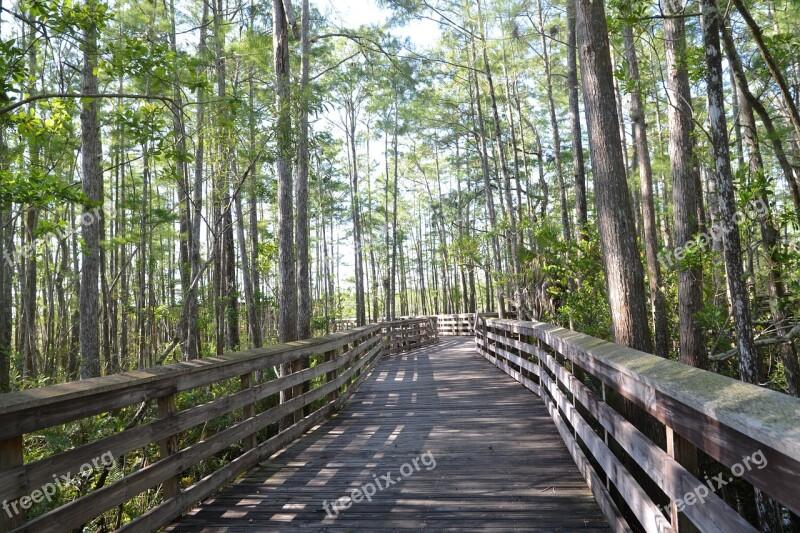 Grassy Waters Preserve West Palm Beach Green Wood Bridge