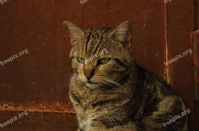 Cat Stray Cat Calico Cat Stray Free Photos